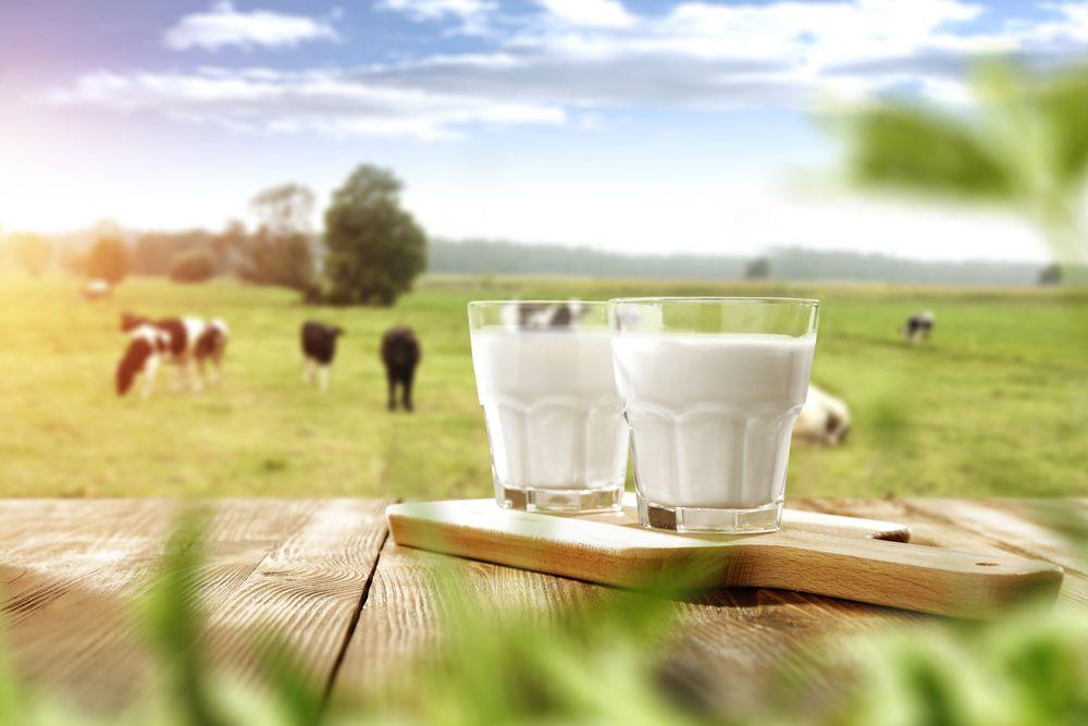 ¿Qué pago por 1 litro de leche?-Kellervet blog