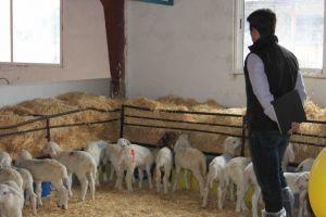 Todo en orden. Visitando la granja A.G.M